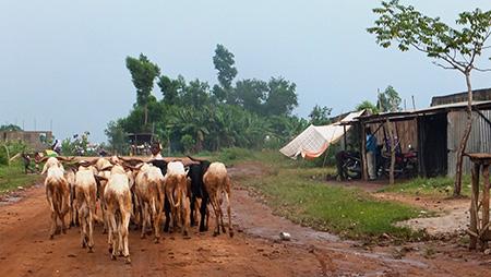 Nous empruntons ensuite, sur 5 km, la piste qui traverse quelques villages.